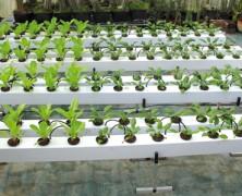 Family Farms – unabhängige Eigenproduktion