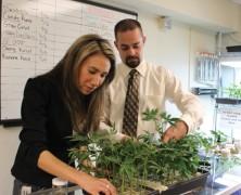 Welches Gras ist medizinisch verwendbar?