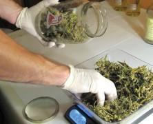 Cannabis-Tinkturen