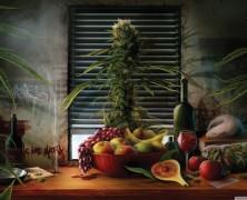 Roher Cannabis und Hanfsaft