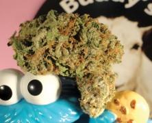 Marihuana für Kinder?
