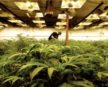 Epilepsie und Cannabis