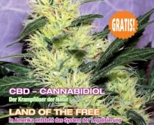 Medijuana 2/2013
