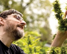 Tschechien legalisiert Medizinalmarihuana