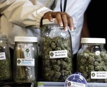 76 Prozent aller Ärzte würden bei Krebs Cannabis verschreiben