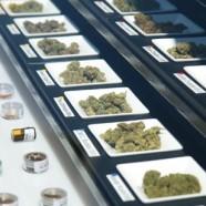 Tourette und Cannabis
