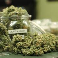Kanada privatisiert medizinischen Cannabis-Anbau