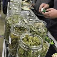 Cannabis kann ein wahrer Segen sein
