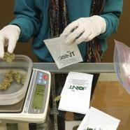 Cannabis blüht in den USA