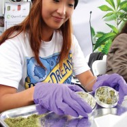 Cannabinoide, Terpene, Verunreinigungen