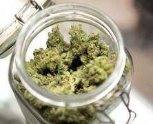 Therapeutisches Marihuana im britischen Parlament