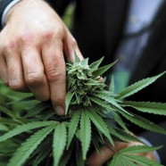 Pressemärchen von Cannabis-Toten