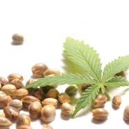 Cannabis in der Küche