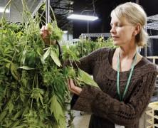 Hanfanbau für Patienten bald möglich?