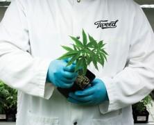 Bundesopiumstelle akzeptiert Selbstanbau von Cannabis