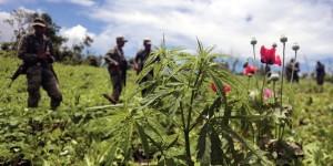 Marijuana- und Opium-legalisierung in Guatemala