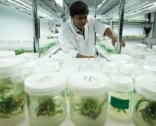 Erklärung Cannabis als Medizin