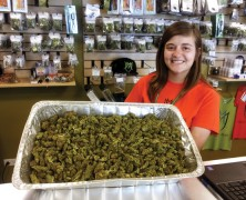 Cannabis wird in Österreich ein Politikum