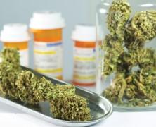 Finger weg: Colchicin und Cannabis