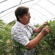 Meilenstein: Deutsches Gericht erlaubt erstmals Cannabis-Eigenanbau zu therapeutischen Zwecken