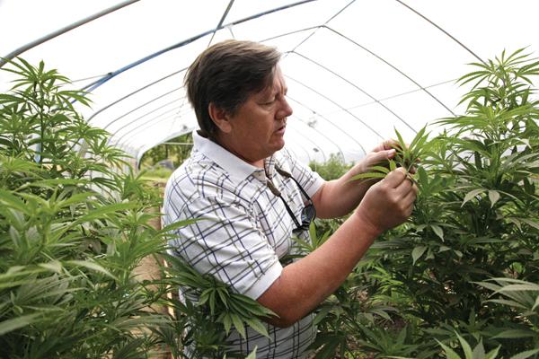 Cannabis-Anbau zu therapeutischen Zwecken