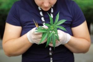 Blütezeit für Cannabispatienten