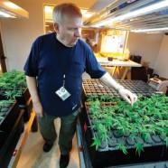Österreichische Aktivisten formieren sich in Cannabis Social Clubs