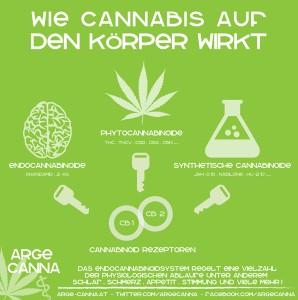 Infografik - Funktion von Cannabis