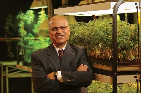 Medizinische Cannabis-Wirkungsstudien