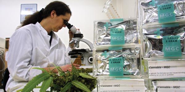 Cannabis wird auch bei Österreichs Grünen wieder en vogue
