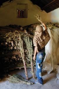 Medizinisches Marihuana aus Marokko