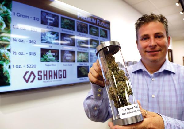 Das Cannabis ist zu potent und verseucht