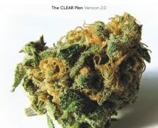 Was wissen wir über medizinisches Cannabis?
