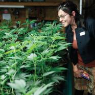 Stockende Legalisierung in Oregon
