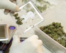 Cannabis und Erkrankungen der Lungen und der Atemwege