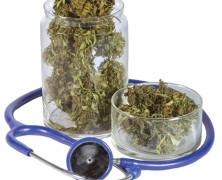 Cannabis könnte bei Transplantationen hilfreich sein
