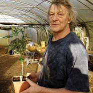 Niederlande: Bio-Cannabis-Bauer schuldig gesprochen – jedoch keine Strafe
