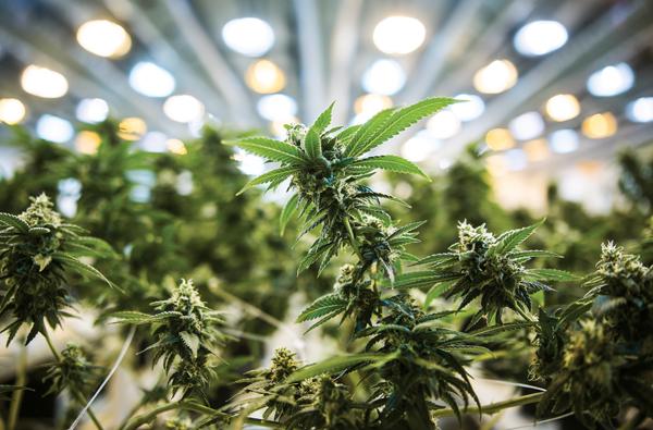 ***FREELANCE PHOTO - POSTMEDIA NETWORK USE ONLY*** SMITH FALLS - Photographs of Tweed medial Marijuana facilities in Smith Falls, Ontario, January 5, 2016. (Chris Roussakis/ for National Post) 0109 biz pk pot ORG XMIT: POS1601061030012554