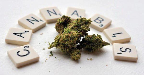 haschich-cannabis-saisies-police-drogue
