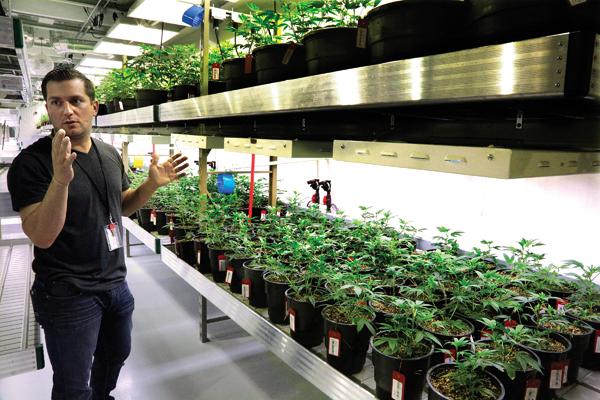Medical Marijuana Illinois Harvest