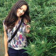 Humane Papillomviren versus Cannabis
