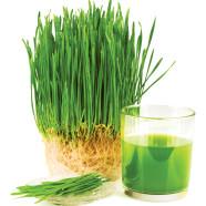 Cocktails aus Weizengras