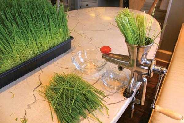 juicing-wheat-grass