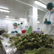 Kanadisches Cannabis für deutsche PatientInnen