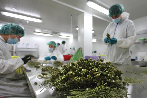 Medical marijuana production facility