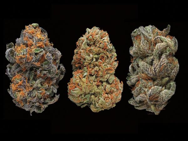 marijuana-standard