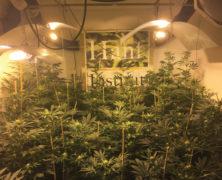 Die Cannabis-Psychose des Staates gefährdet Menschenleben