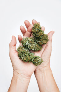 Kiva_CBD_flower_in_hands