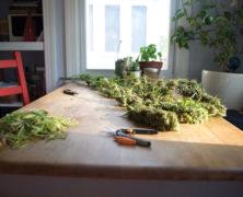 Morbus Crohn – symptomfrei mit Cannabis