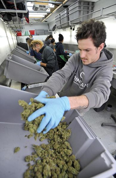 strafe cannabis anbau deutschland